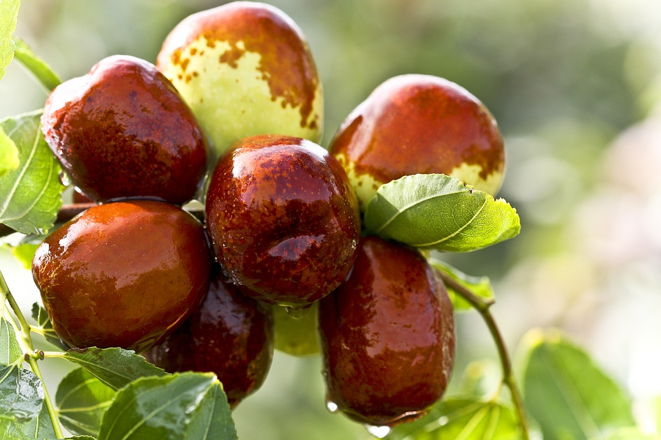 Read more about the article The Best Salads With Dates In Them